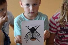 tematicky_tyden_hmyz_minisvet (4)