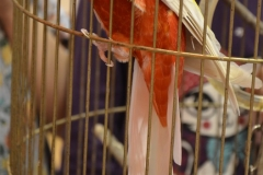 Papousek ve skolce (10)