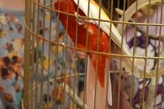 Papousek ve skolce (9)