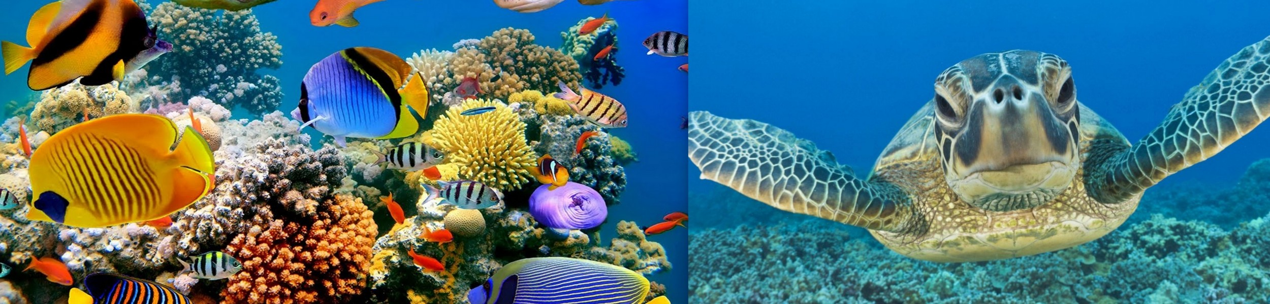 cesta do hlubin aneb pod vodou