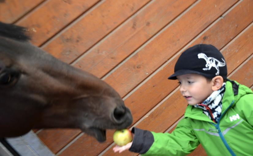 Jezdecký kurz pro děti – hurá jedeme na koníčky