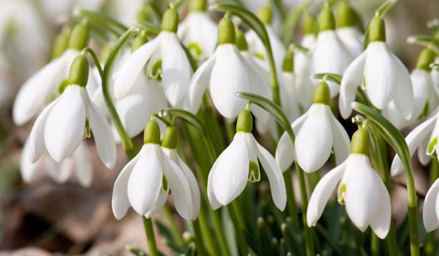 Vynášení Morany a vítání jara – 22.března