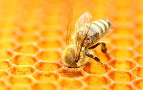 Včelařství – zážitkové poznávání přírody